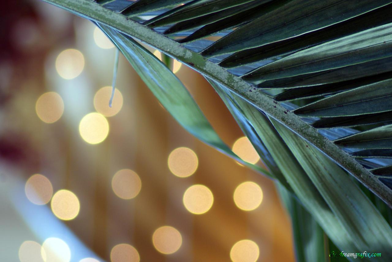 palmy bokeh