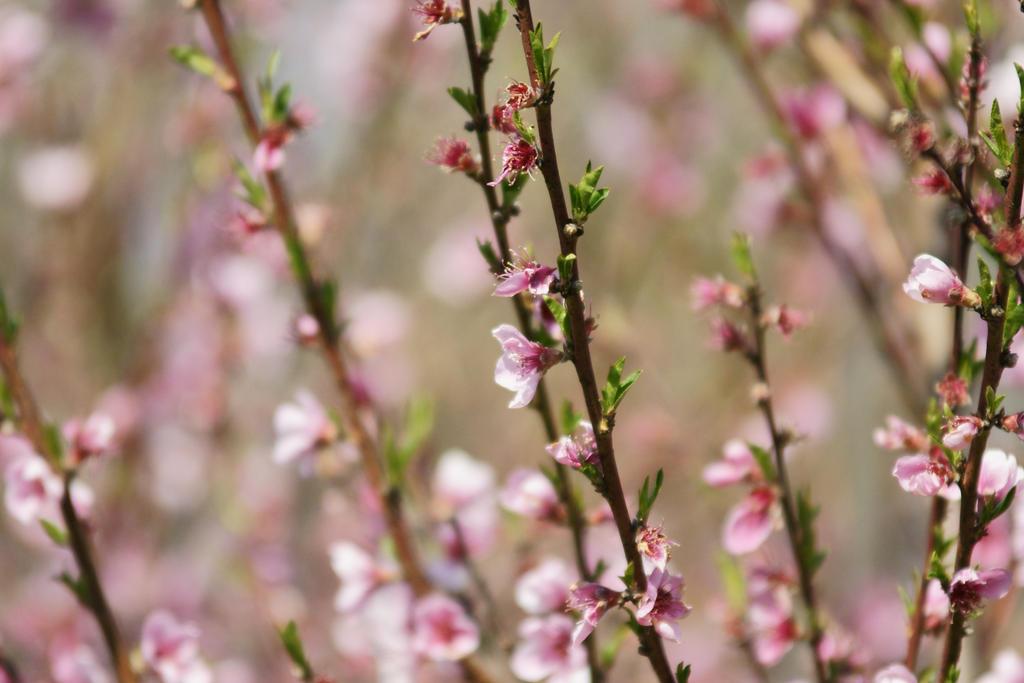 spring 4 by digidreamgrafix