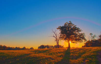 Lonely Tree On Farm Land by digidreamgrafix