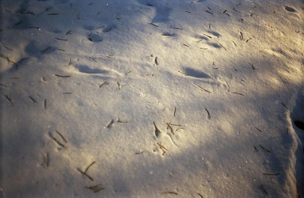 snow by teplione