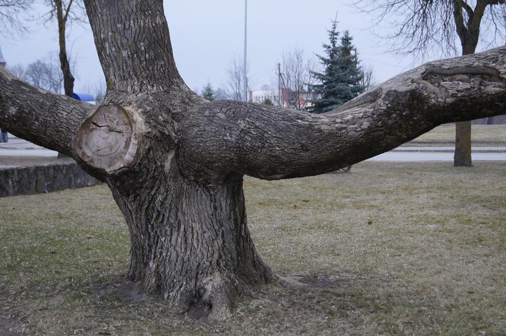 tree by teplione