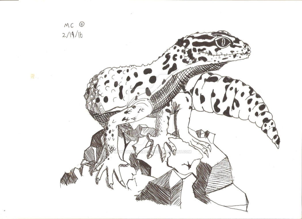 leopard gecko pen and ink by midnightscreations