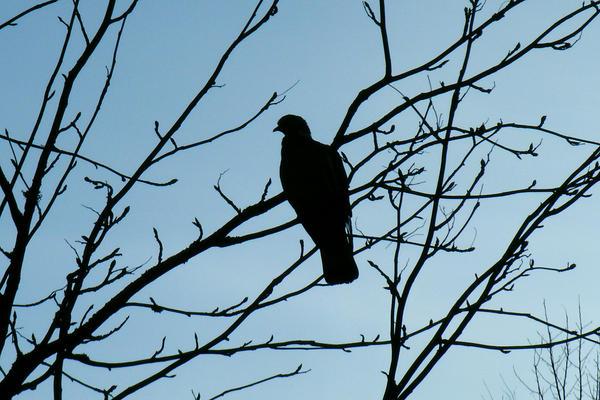 I met a dove today, original. by knirket