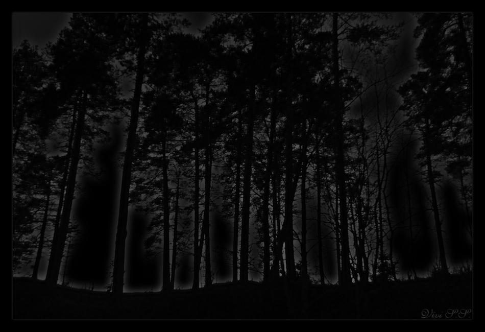 Woods by knirket