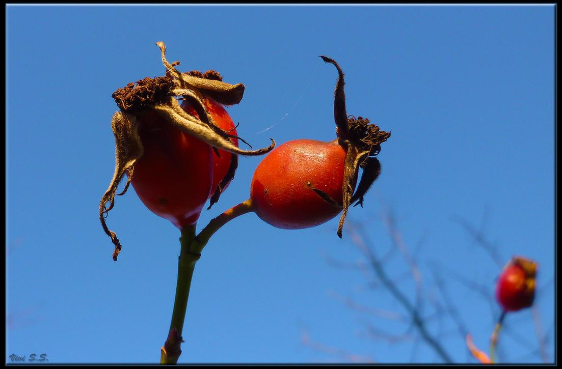 Berries pt. 1 by knirket