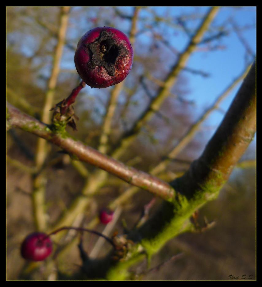 Berries pt. 2 by knirket