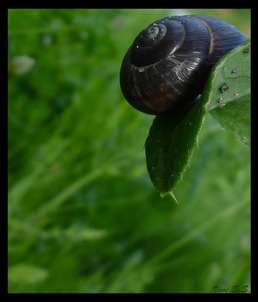 Snail by knirket