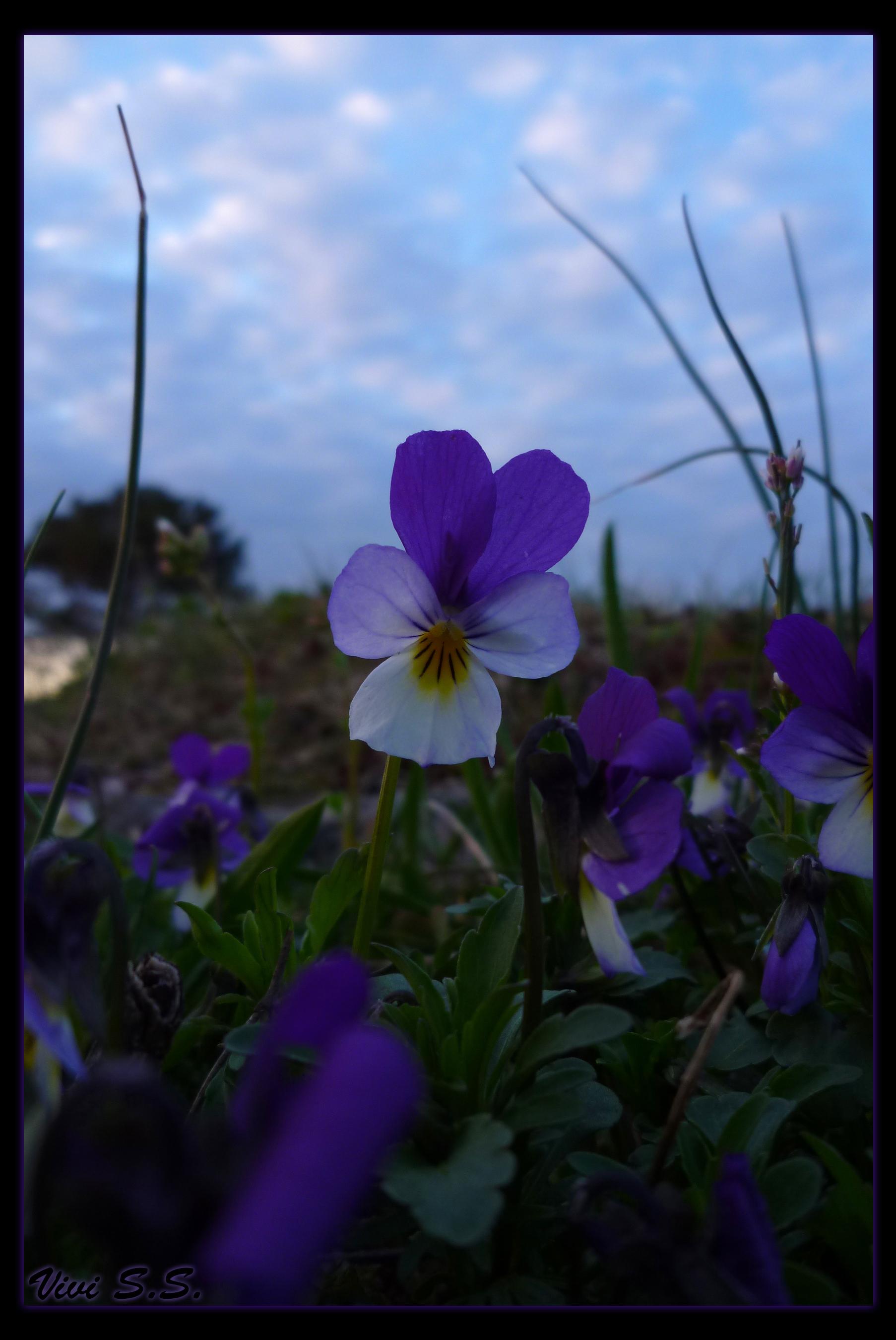 Flower by knirket