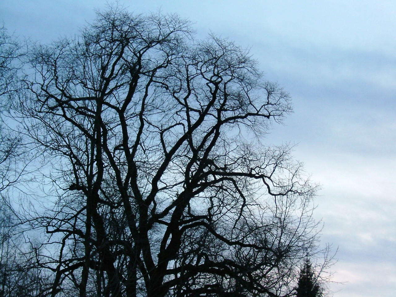 A tree. by knirket