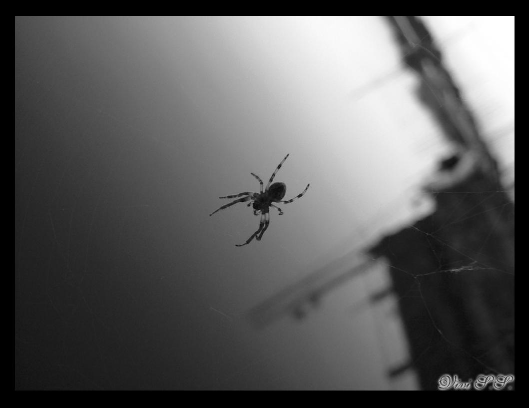 The Spider of Hellcity by knirket