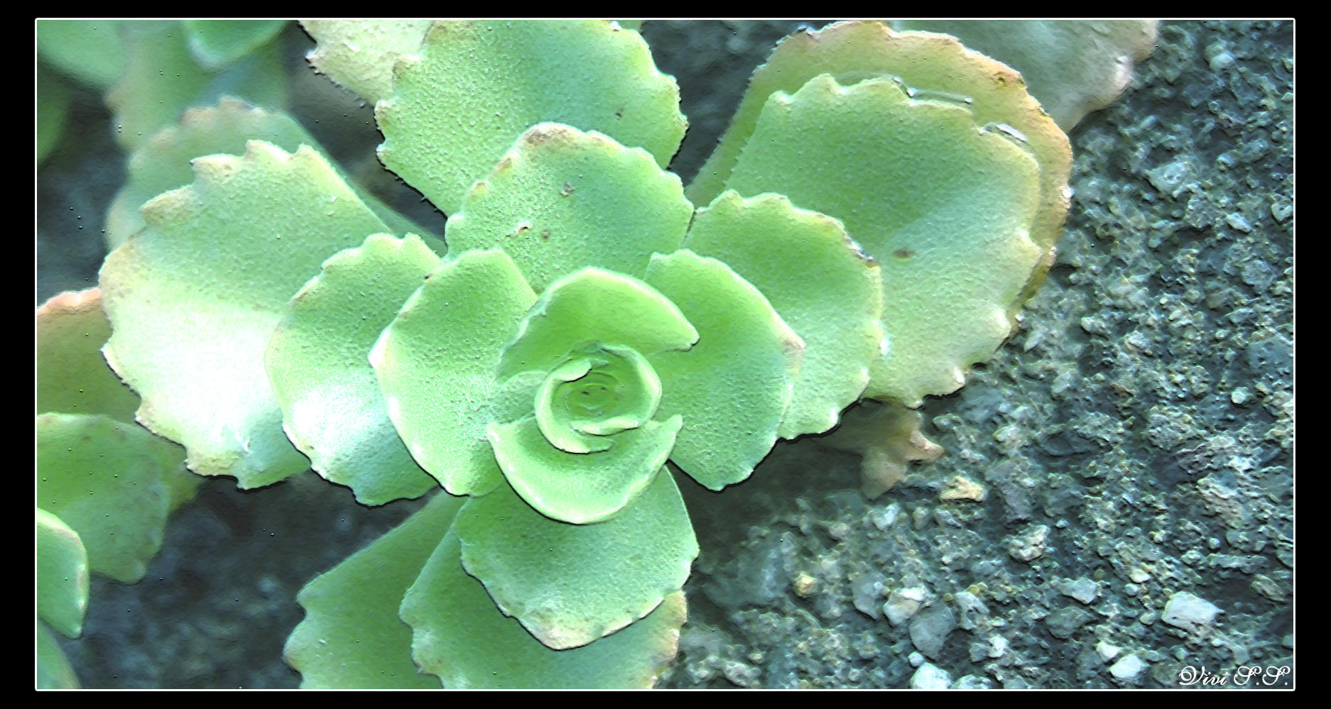 Goodbye, flower... by knirket