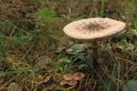 Fungi Stock 01