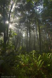 San Juan forest