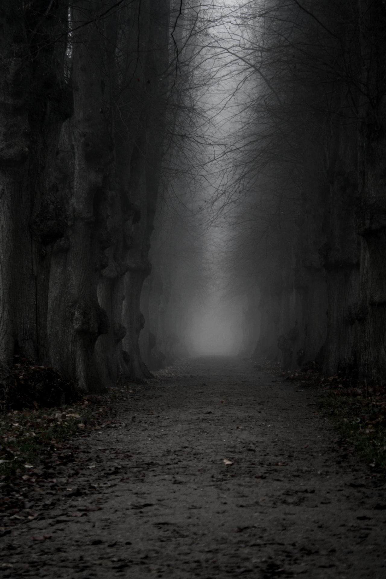 The dark path by Stony... Dark Path In The Woods