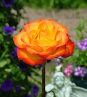Brilliant Rose v2