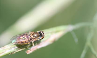 Shiny Fly