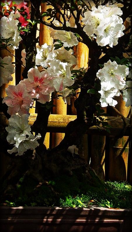 Bonsai by YouAndIWereBornToDie