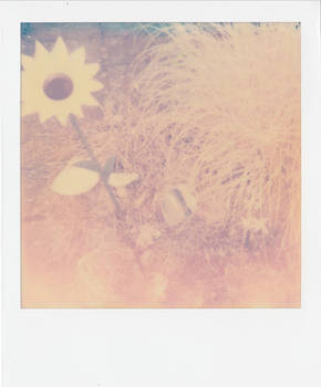 The Last Flower - plaggy