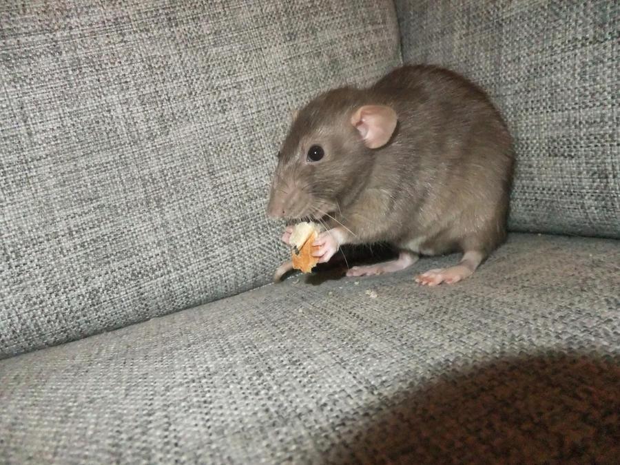 Enya eating bread crumbs by Milyah