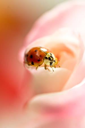 Ladybug by Sonny2005