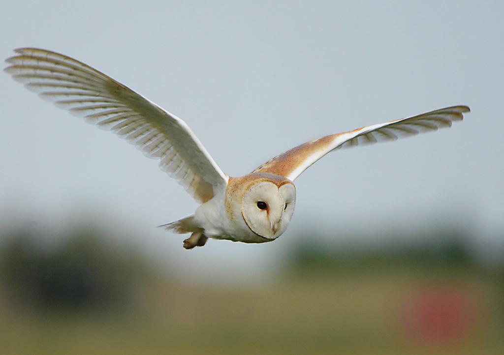 Gliding grace by pixellence2