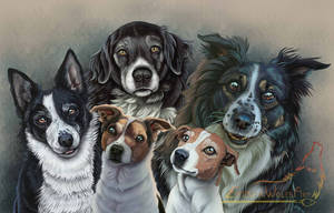 All the doggies + VIDEO