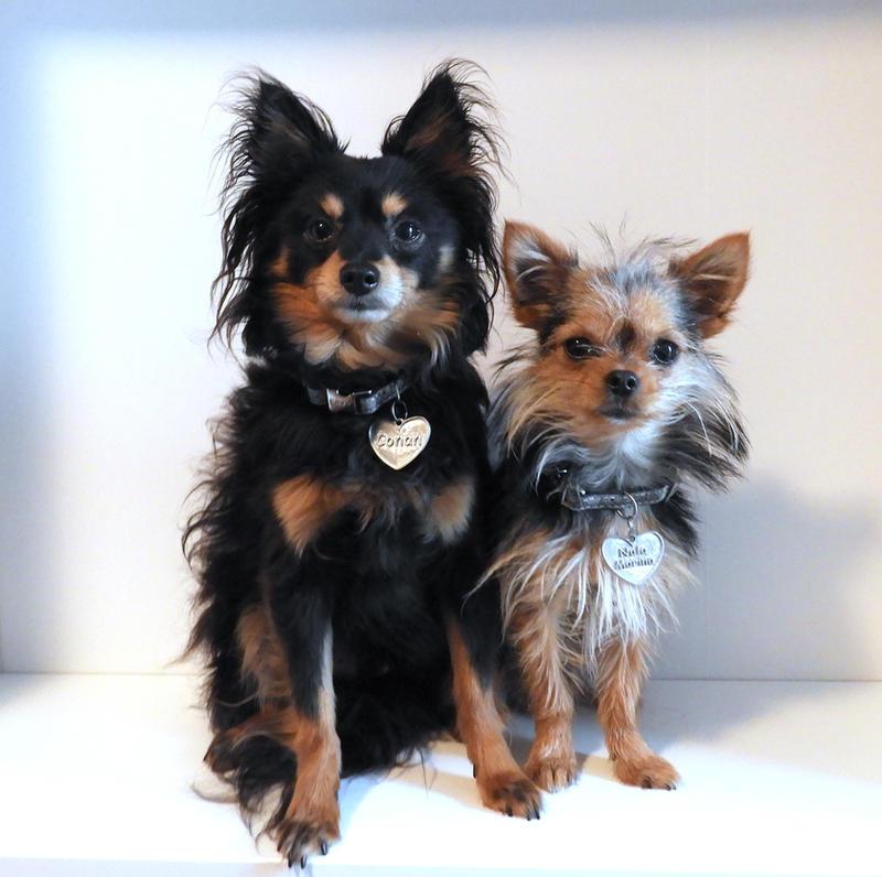 Dogs: Conan - Nala by ToygerCat