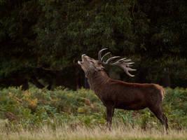Red Deer 02 - Sept 10 by mszafran