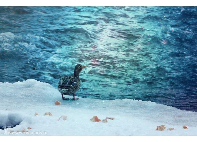 blue shores by Keila-the-fawncat