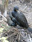Nesting Birds