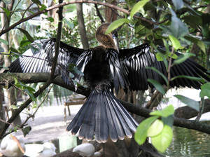 Bird with wings extended