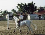 Horse Rider Stock