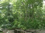 woods by animec20