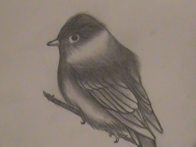 Realistic Bird Drawing By Midnightmoon7 On DeviantArt