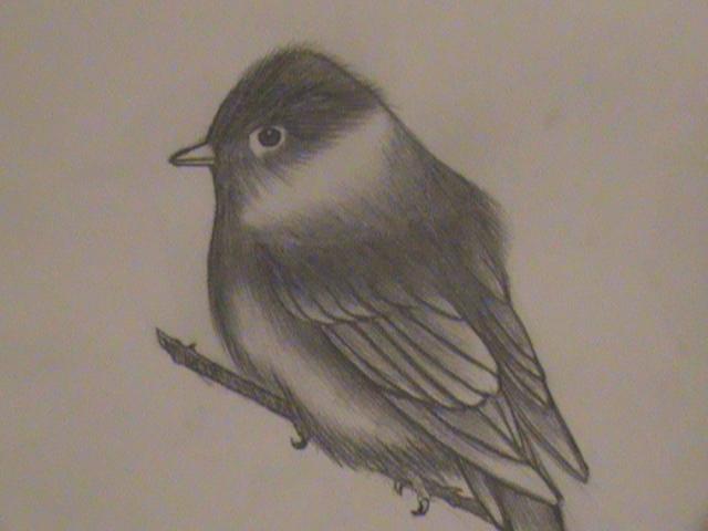 Realistic Bird Drawing