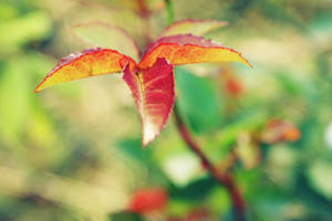 Autumn in spring by ladyang
