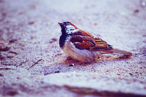 Little sparrow by ladyang