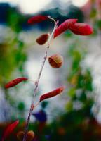Taste of autumn by ladyang