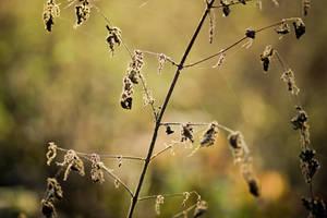 Autumn sun II by ladyang