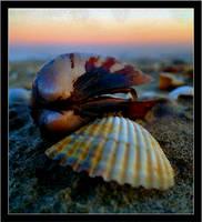 Shells by vissare