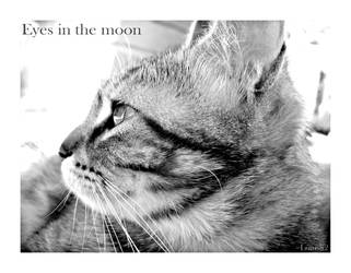 Eyes in the moon by lotus82