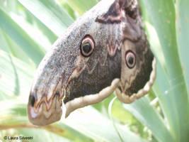 Butterfly II by lotus82