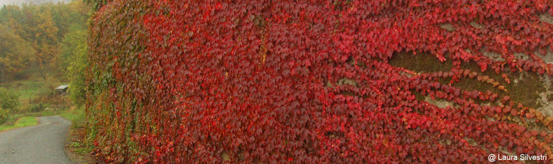 Autumn Wall by lotus82