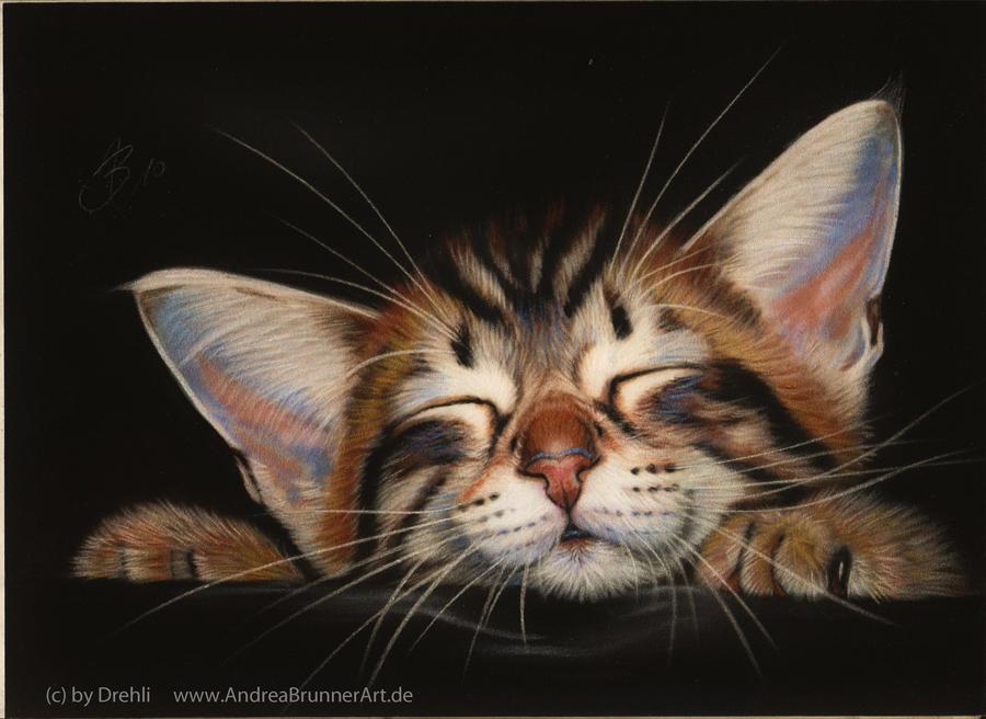 Cute Cat Pencil Drawing