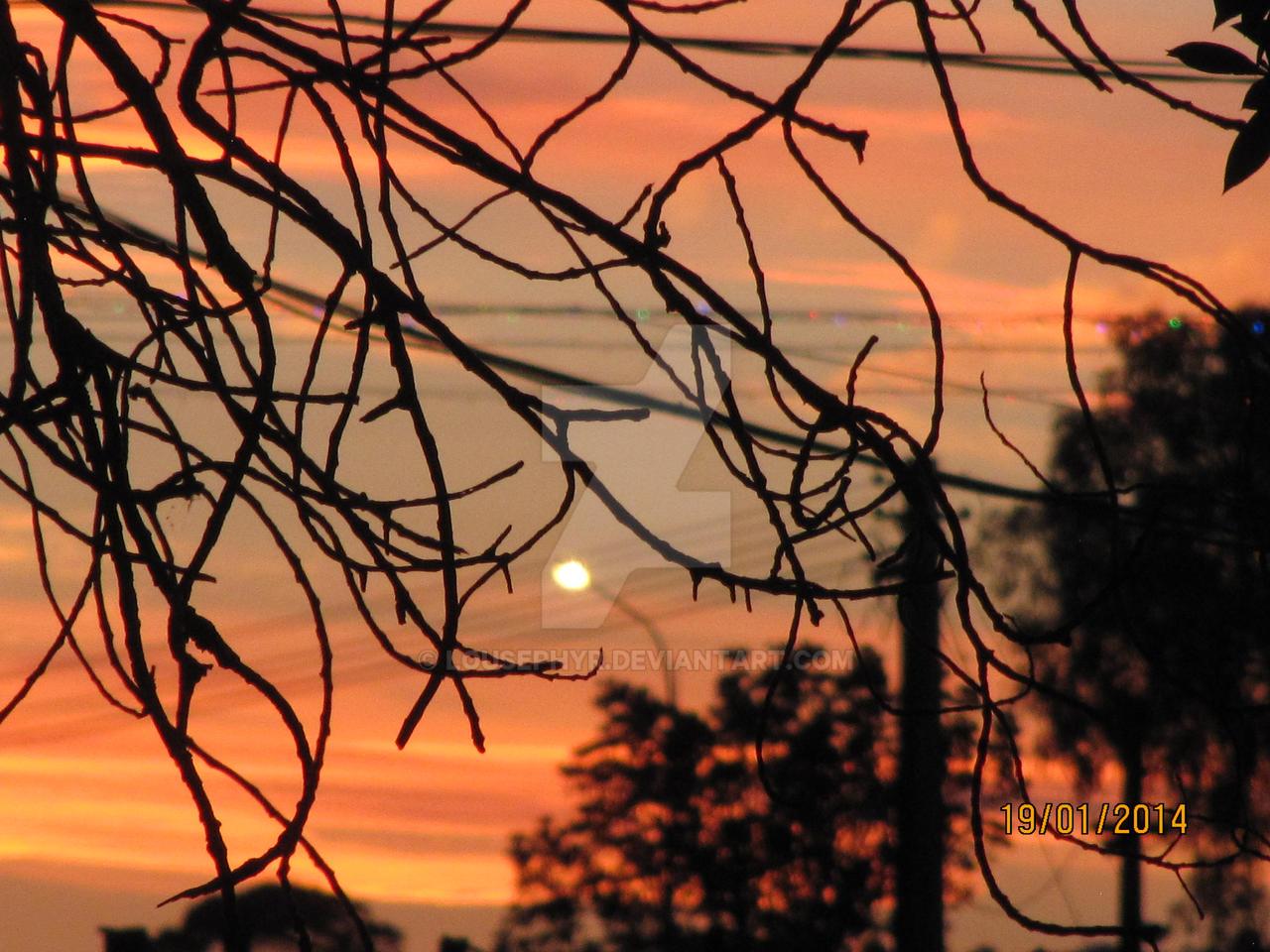 Fiery Sky Thru Trees by lousephyr