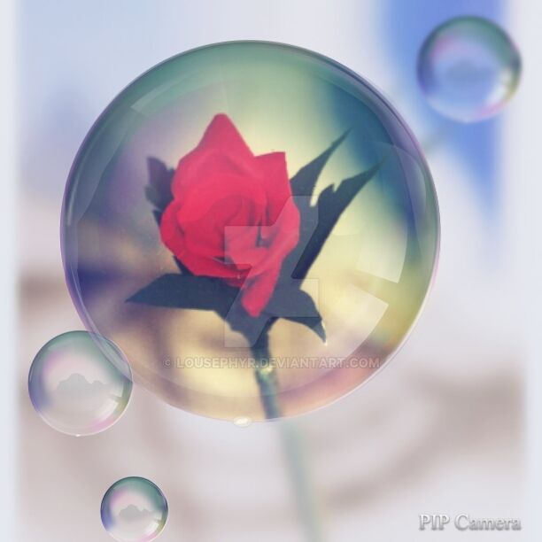 Bubble Rose...Pipcamera by lousephyr