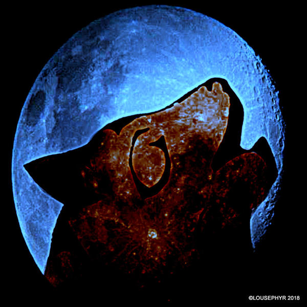 Blue Moon-Howl by lousephyr