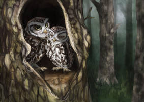 Little Owls by Felix-Vulpes