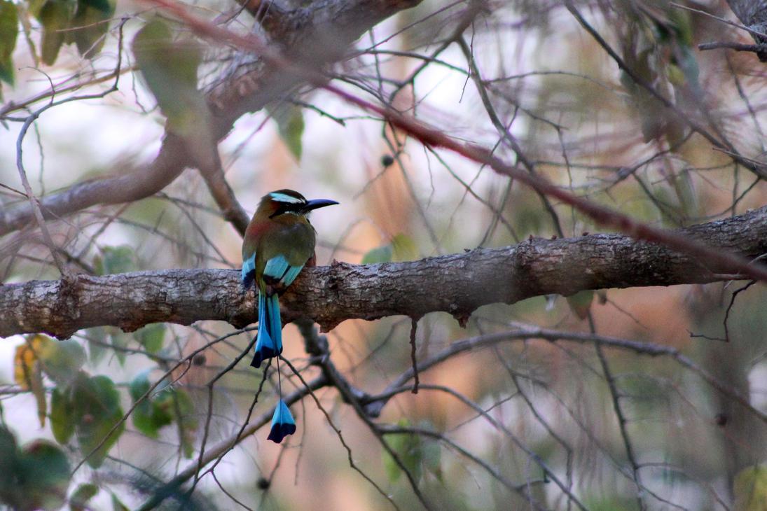 Toh bird by linus9302