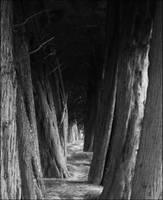 Trees by V-E-I-L